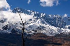 Снег дерева облаков гор Стоковые Изображения RF