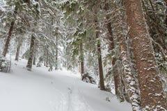 Снег, зима, ландшафт, снежный Стоковые Изображения RF
