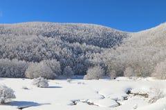 Снег & зима Стоковые Фотографии RF
