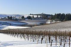 Снег зимы в виноградниках западного Орегона Стоковое Фото
