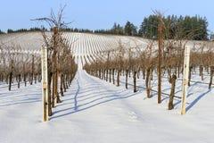 Снег зимы в виноградниках западного Орегона Стоковые Изображения