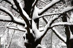 Снег зимы на дереве Стоковое фото RF