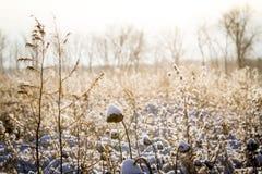 Снег Индианы Стоковые Изображения