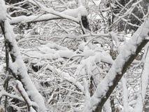 Снег и гора Стоковые Изображения