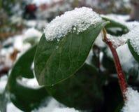 Снег и лед на зеленых лист Стоковая Фотография
