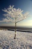 Снег и лед покрыли дерево Стоковые Фото
