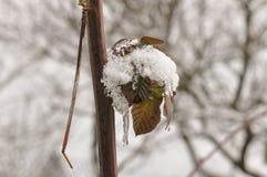 Снег и лед на зеленых лист Стоковая Фотография RF
