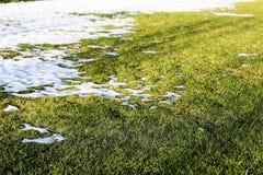 Снег и трава на зиме Стоковые Изображения