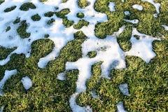 Снег и трава на зиме Стоковое фото RF