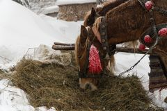 Снег лошади зимы 2 лошади ест сено стоковые изображения