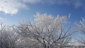 Снег на ветвях дерева Взгляд зимы деревьев покрытых с снегом Суровость ветвей под снегом снежности Стоковое Изображение RF