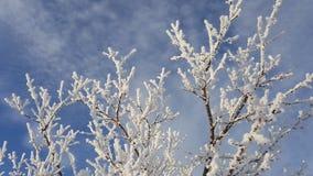 Снег на ветвях дерева Взгляд зимы деревьев покрытых с снегом Суровость ветвей под снегом снежности Стоковое фото RF