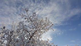 Снег на ветвях дерева Взгляд зимы деревьев покрытых с снегом Суровость ветвей под снегом снежности Стоковое Изображение