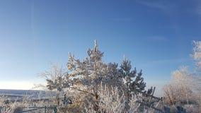 Снег на ветвях дерева Взгляд зимы деревьев покрытых с снегом Суровость ветвей под снегом снежности Стоковые Фотографии RF