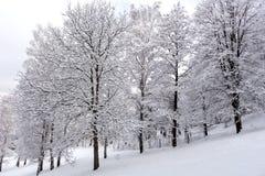 Снег на ветвях дерева Взгляд зимы деревьев покрытых с снегом Суровость ветвей под снегом Стоковые Изображения RF