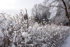 Снег на ветвях дерева Взгляд зимы деревьев покрытых с снегом Суровость ветвей под снегом Стоковое Изображение RF
