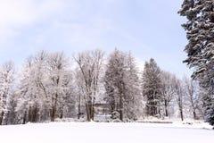 Снег на ветвях дерева Взгляд зимы деревьев покрытых с снегом Суровость ветвей под снегом Стоковое Фото