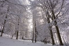 Снег на ветвях дерева Взгляд зимы деревьев покрытых с снегом Суровость ветвей под снегом Стоковая Фотография RF