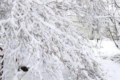 Снег на ветвях дерева Взгляд зимы деревьев покрытых с снегом Суровость ветвей под снегом Снежности в природе Стоковые Фотографии RF