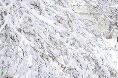 Снег на ветвях дерева Взгляд зимы деревьев покрытых с снегом Суровость ветвей под снегом Снежности в природе Стоковое фото RF