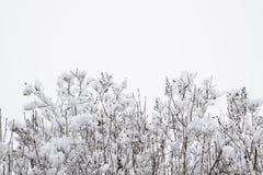 Снег на ветвях дерева Взгляд зимы деревьев покрытых с снегом Суровость ветвей под снегом Снежности в природе Стоковое Изображение