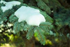 Снег на ветвях деревьев Стоковые Фото