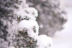 Снег на ветвях сосны Красивая предпосылка для рождественской открытки Стоковая Фотография RF