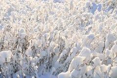 Снег на ветвях Стоковые Фотографии RF