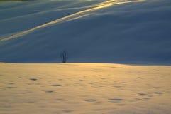 Снег на горах в плато Asiago, Виченца, Италии стоковое фото rf