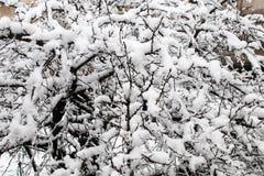снег на депозитах снега на ветвях фруктового дерев дерева, холоде и Стоковые Фотографии RF