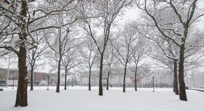 Снег на деревьях и землях морозная зима снежностей природы утра стоковые фотографии rf