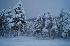 Снег на деревьях стоковые фотографии rf