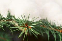 Снег на елевых ветвях в лесе Стоковое фото RF