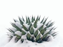 Снег на заводе столетия Стоковые Фотографии RF