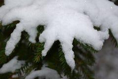 Снег на зеленые ветви рождественской елки стоковое фото rf