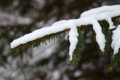 Снег на зеленые ветви рождественской елки стоковое изображение rf