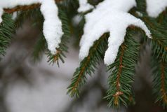 Снег на зеленые ветви рождественской елки стоковое фото