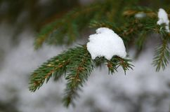 Снег на зеленые ветви рождественской елки стоковые фото