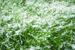 Снег на зеленой траве Стоковое Изображение