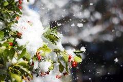 Снег на листьях стоковые изображения rf