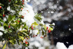 Снег на листьях стоковое фото