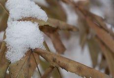 Снег на листьях стоковые фото