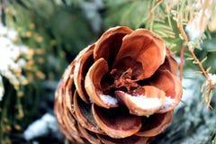 Снег на конусе сосны Стоковые Изображения RF