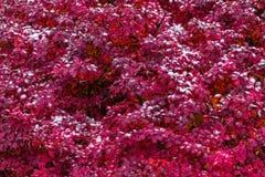 Снег на красивом красном взгляде конца-вверх завода стоковое изображение