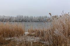 снег на оранжевой траве Лед на реке Стоковое Изображение RF