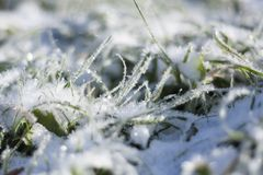 Снег на траве Стоковое Фото