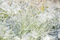 Снег на траве Стоковое фото RF