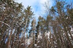 Снег дневного времени покрыл деревья Стоковая Фотография RF