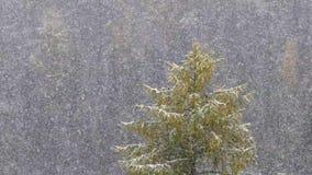 Снег падая в замедленное движение против предпосылки леса акции видеоматериалы