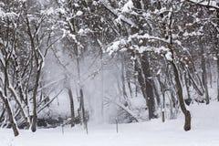 Снег падая от дерева Стоковые Изображения